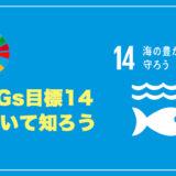 【SDGs】SDGs目標14:海の豊かさを守ろう